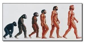 از میمون تا انسان